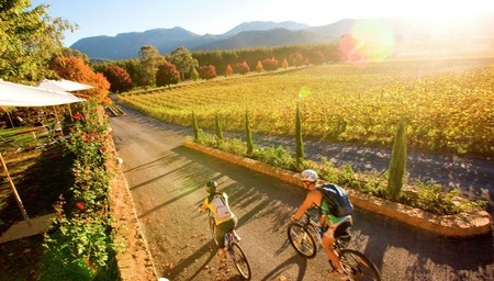 Pedal & Picnic in the Vines