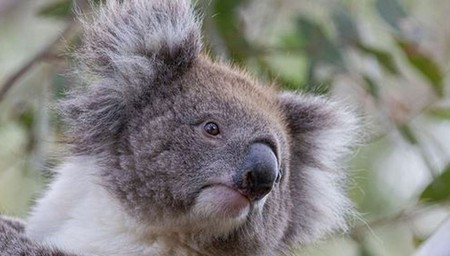 Fauna and Flavours of Australia