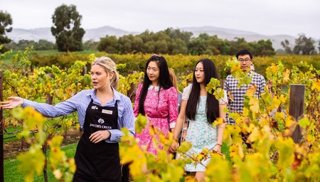 Vineyard Tour, Wine Tasting and Two Course Lunch