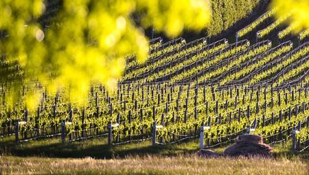 Launceston & Hobart Wine Trail