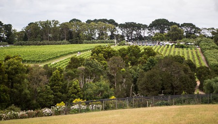 The Ultimate Pinot Lovers Road Trip