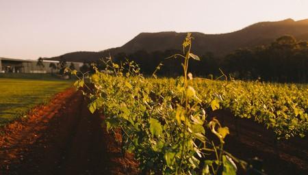 Hunter Valley Wine Trail