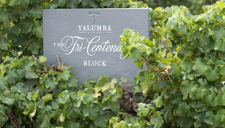 Yalumba Nursery & Grenache Discovery