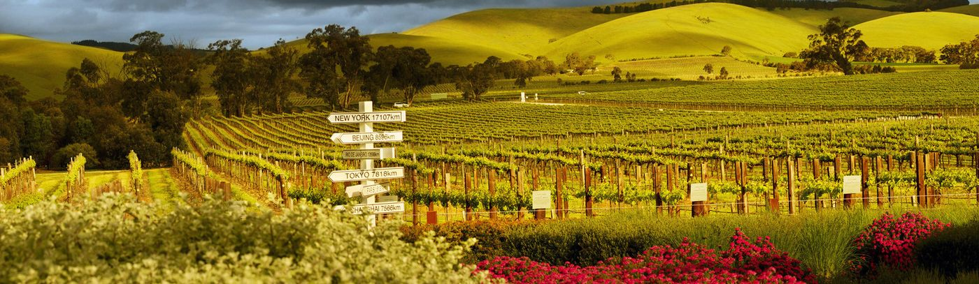 Jacob S Creek Visitor Centre Winery Tours And Experiences
