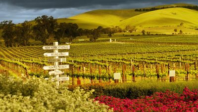 The Big Bold Barossa