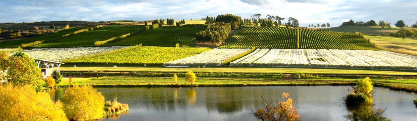 Autumn postcards from the vineyards