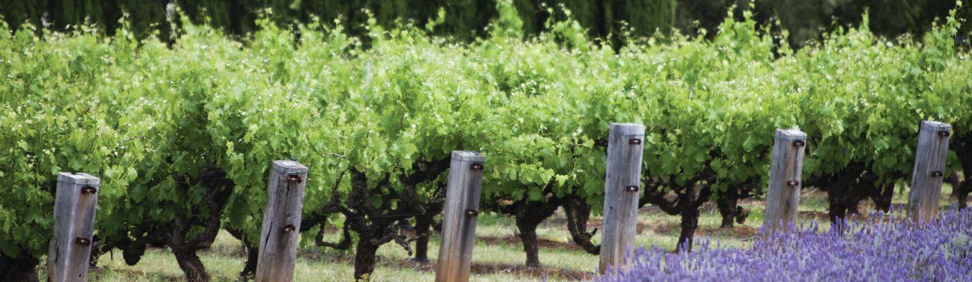 World's Best Vineyards 2019