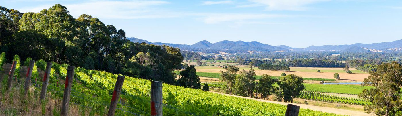 Hilltops to River Flats: A Vineyard Tasting Experience