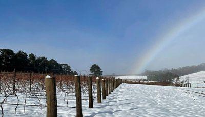 Snowy Vineyard Vistas