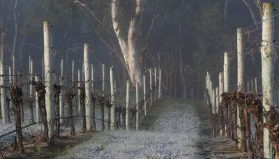 Winter in the Wineries