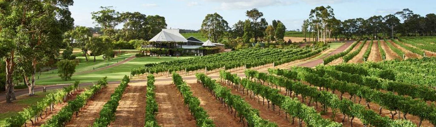 022_20170207_Vasse Felix_Vineyards Small